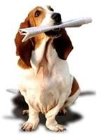 Canil em Niteroi - Adestramento de Cães
