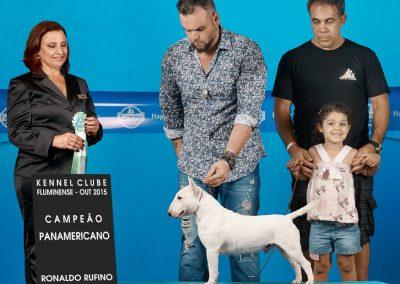 """Ora Bolas Itapuca """"Tijolo"""" bull terrier miniatura - DSC 0139 C  pia 400x284 - Bull Terrier Miniatura em Niterói"""