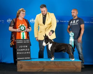 "DSC_5347ainternet ""Texas""em 1º no ranking Brasileiro da raça Bull terrier miniatura da CBKC 2016 - DSC 5347ainternet 300x240 - ""Texas""em 1º no ranking Brasileiro da raça Bull terrier miniatura da CBKC 2016"