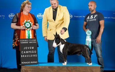 """Texas""em 1º no ranking Brasileiro da raça Bull terrier miniatura da CBKC 2016"