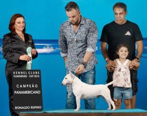 Pai : campeão brasileiro e panamericano   - Pai Tijolo 1 300x238 - Bull terrier miniatura nova ninhada