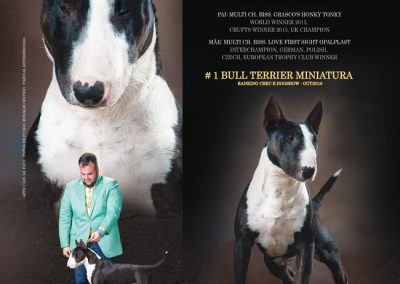 """Texas"" Ranger Bullterroir Aguiar bull terrier miniatura - baixa 400x284 - Bull Terrier Miniatura em Niterói"