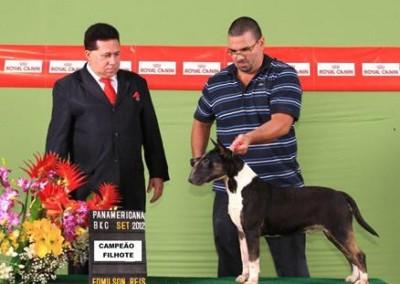 bul-terrier-gigi13 bull terrier niterói - bul terrier gigi13 400x284 - Bull Terrier Niterói