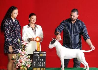 bul-terrier-gigi2 bull terrier niterói - bul terrier gigi2 400x284 - Bull Terrier Niterói