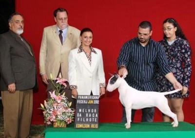 bul-terrier-gigi7 bull terrier niterói - bul terrier gigi7 400x284 - Bull Terrier Niterói