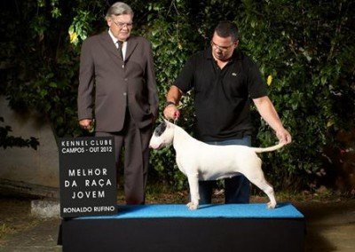 bul-terrier-gigi8 bull terrier niterói - bul terrier gigi8 400x284 - Bull Terrier Niterói