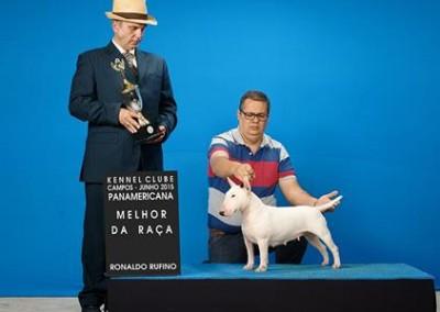 """Minnye"" Ronda Aguiar Ora Bolas Itapuca bull terrier miniatura - bul terrier mini4 400x284 - Bull Terrier Miniatura em Niterói"