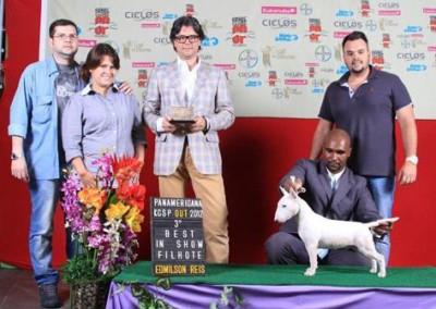 Ora Bolas Itapuca Tijolo bull terrier miniatura em niterói - bul terrier mini7 400x284 - Bull Terrier Miniatura em Niterói