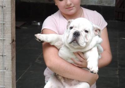 filhotes-bulldog-ingles-niteroi-rj-2 filhotes de bulldog inglês em niterói - filhotes bulldog ingles niteroi rj 2 400x284 - Filhotes de Bulldog Inglês em Niterói