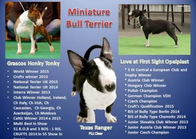 Texas Folder bull terrier miniatura - Texas Folder 400x284 - Bull Terrier Miniatura em Niterói