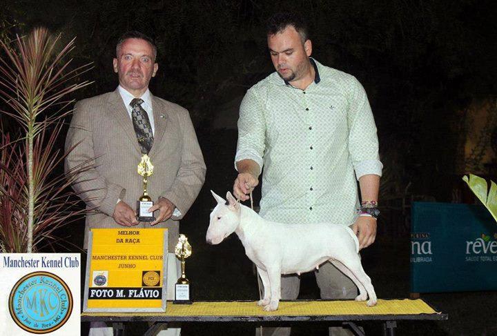 Campeã Brasileira e Panamericana – Bull terrier Miniatura