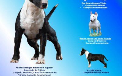 Melhor canil de Bull Terrier Miniatura do Estado do RJ em 2016 no Ranking Dogshow