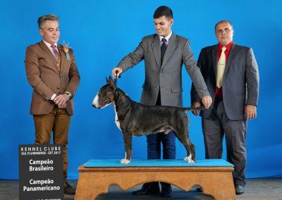 Pai - Kenpachi filhotes de bull terrier niterói - Pai Kenpachi 400x284 - Filhotes de Bull Terrier Niterói