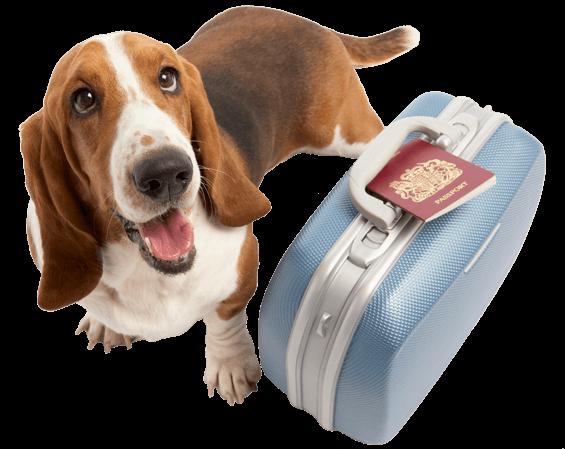 hospedagem de cães em niterói - hospedagem caes niteroi rj 3 - Hospedagem de Cães em Niterói – Hotel para Cães