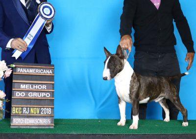 "Buakaw de L`cossta "" bull terrier miniatura - 1aREIS1914 C  pia 400x284 - Bull Terrier Miniatura em Niterói"