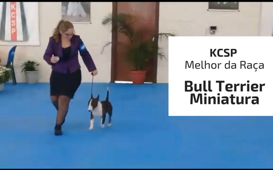 Nosso Joaquin (Bull Terrier Miniatura) brilhou mais uma vez na exposiçao do KCSP em 16/03/2019