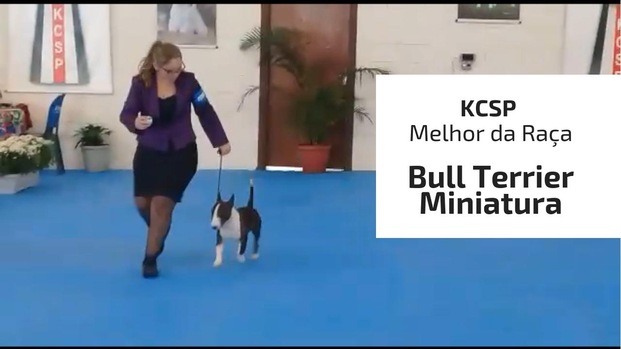 - KCSP Melhor da Ra  a - Nosso Joaquin (Bull Terrier Miniatura) brilhou mais uma vez na exposiçao do KCSP em 16/03/2019 canil em niteroi - KCSP Melhor da Ra C3 A7a - Canil em Niteroi