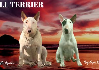 Pai e Mãe filhotes de bull terrier niterói - BULL TERRIER 2 400x284 - Filhotes de Bull Terrier Niterói